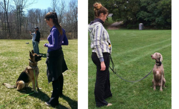 puppy training stoney creek