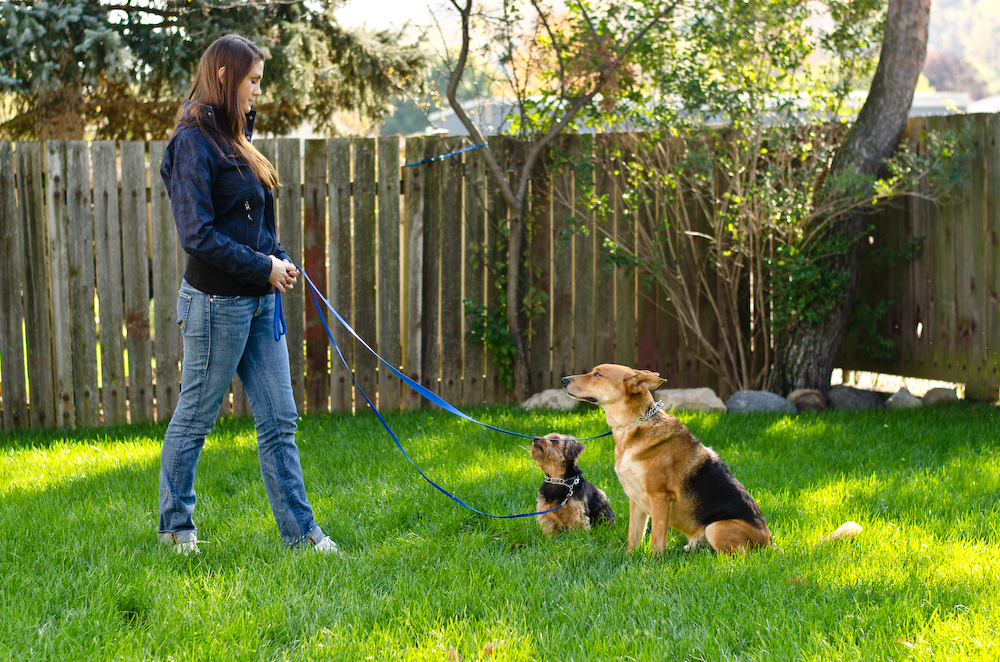 Dog Training – Why your dog doesn't listen
