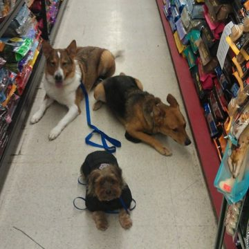 dogs obedience pet store Stoney Creek