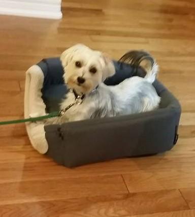 Dog training Beamsville