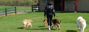 off leash dog training ancaster