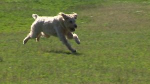 off_leash_dog
