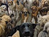 dog_daycare