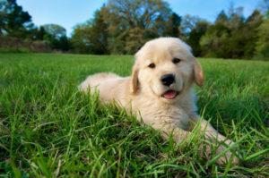 puppy_training